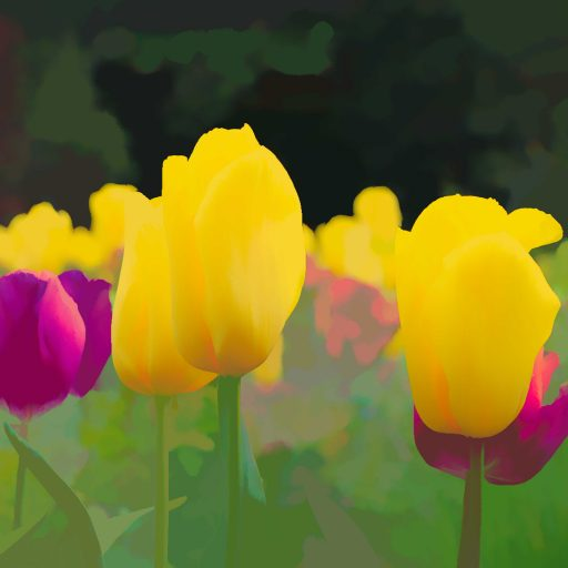 cropped-tulips2-1.jpg
